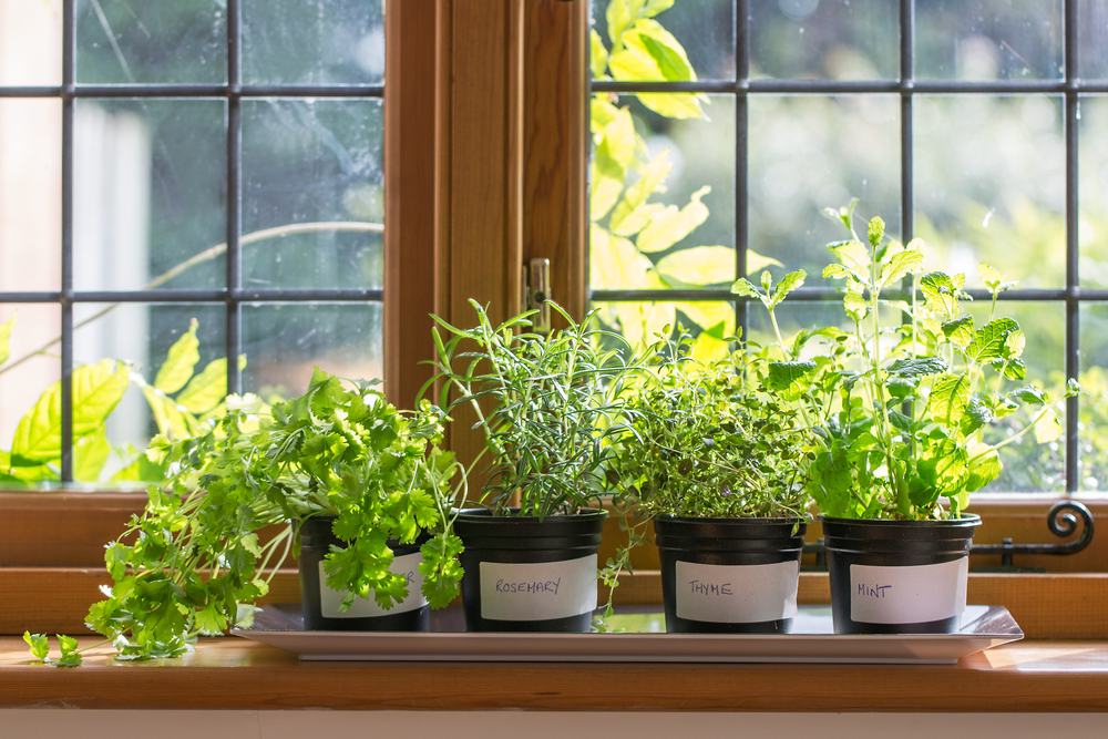 Выращивание зелени на подоконнике фото 60