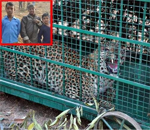 children caught panther