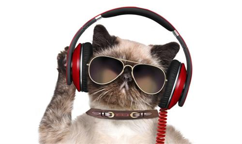 music album for cats