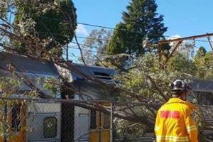 train delays as tree crashes in sydney