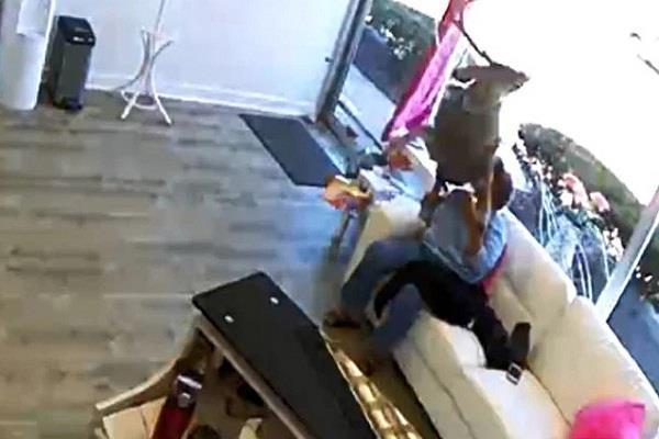 america  deer jumps over woman