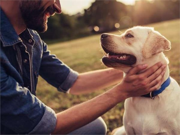 owning a dog could help you live longer  study finds