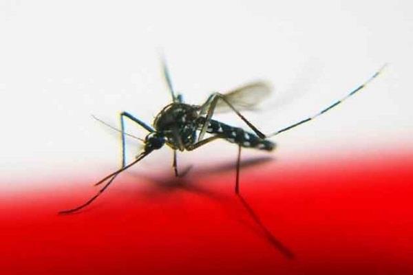 pakistan  dengue outbreak
