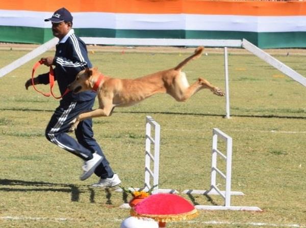 dog squad by training dehradun