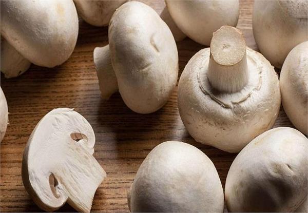 mushroom vegetable