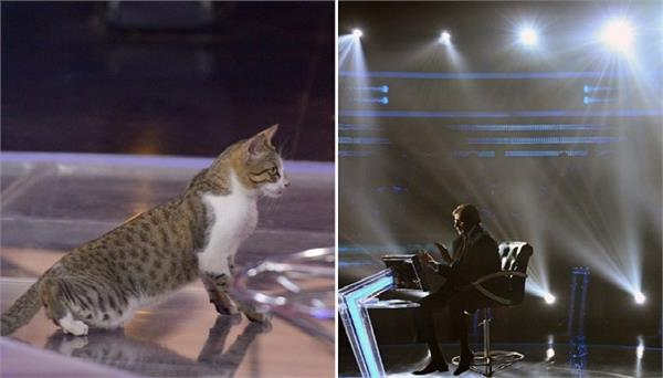 cat in the hot seat  amitabh bachchan gets an unusual contestant on kbc 11