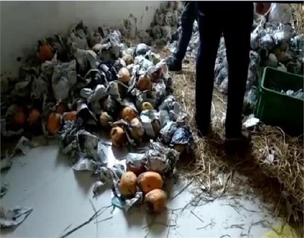 ferozepur  health department  papaya