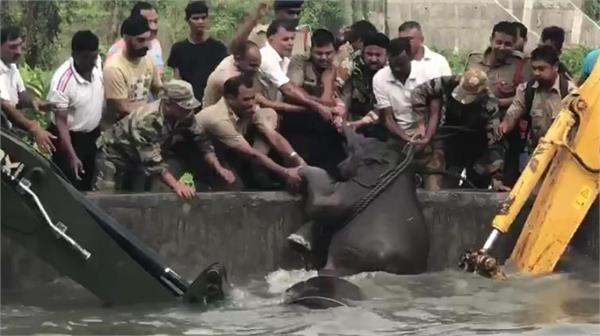 indian army forest personnel rescue elephant calf and mother from a water tank
