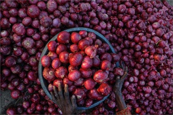 onion red  priced