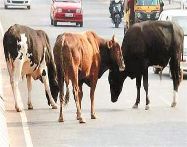 gurdaspur  helpless animal