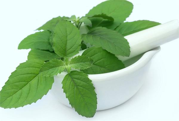 tulsi benefits seasonal fever