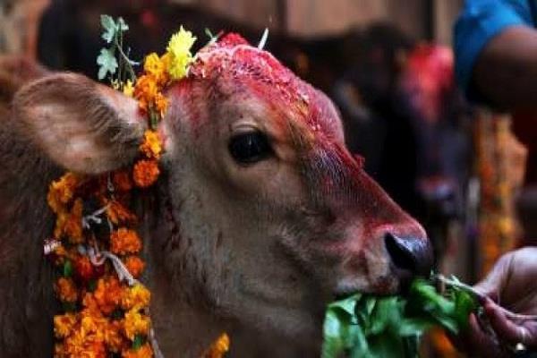 nepal  temple festival