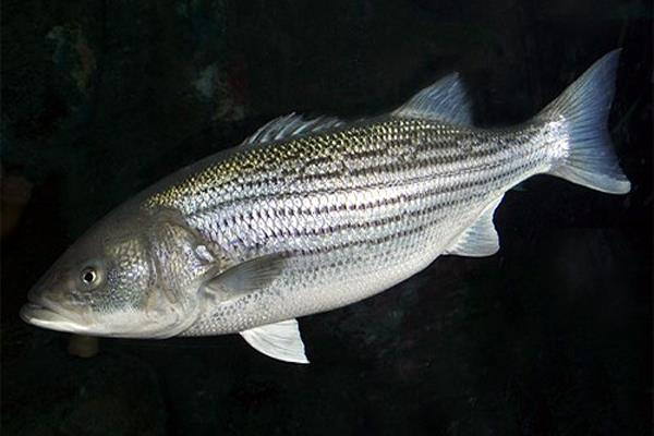 cancer can be caused by fish in mumbai