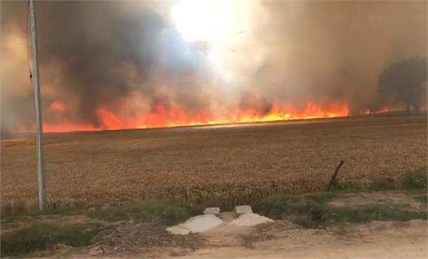 moga wheat crop fire