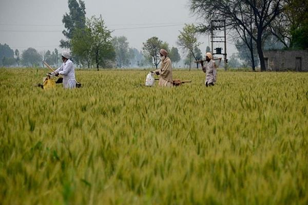 chandigarh  punjab government  pm farmer nidhi scheme  self declaration letter