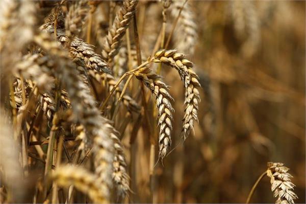punjab government crop proposal