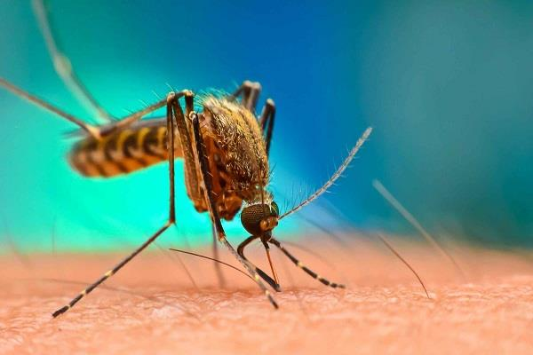 china  eradication of mosquitoes