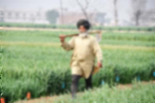 crops in punjab