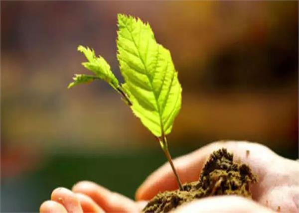 national holiday to plant saplings in this world