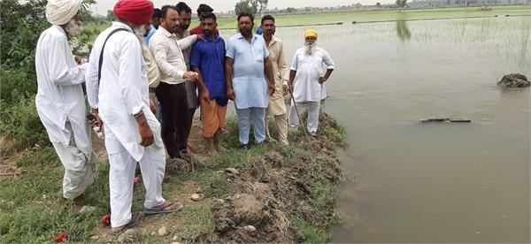 90 acres of paddy crop