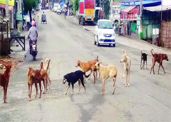 wild dogs  ghanour  horror