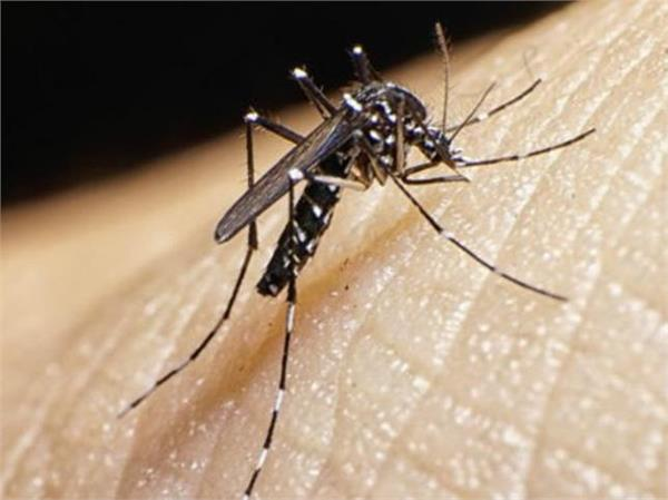 dengue kills 40 in bangladesh