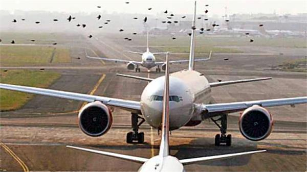 delay in landing of 2 airplanes due to dead birds lying on the plane
