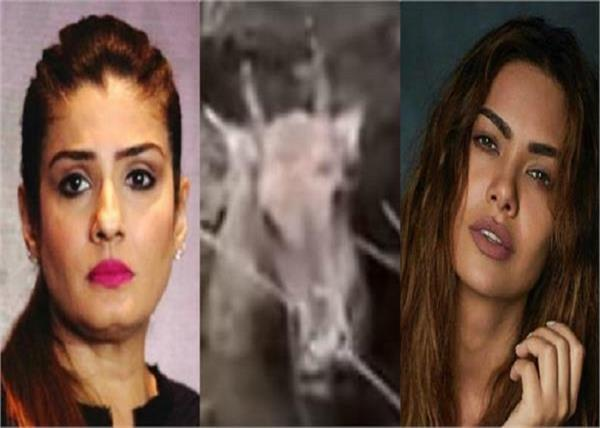 bollywood actress rage on these people burying nilgai alive