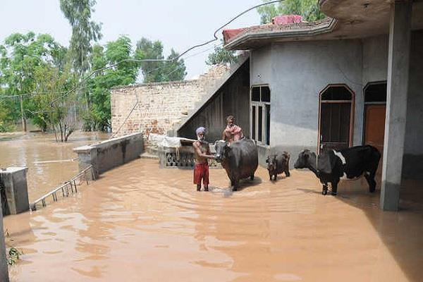 cattle feed sent punjab feed millers flood affected areas of jalandhar