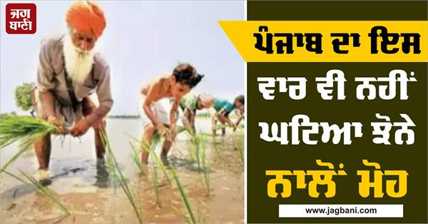 punjab do not lose their love over paddy