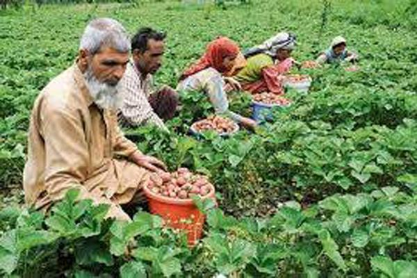 attempt to connect farmers directly to the market  director of agriculture