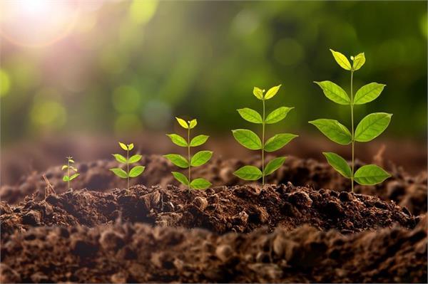pau  sustainable agribusiness  online courses
