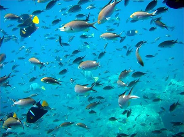 blue revolution plan fisheries projects subsidies