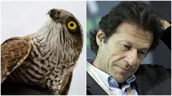 government of pakistan 150 falcons