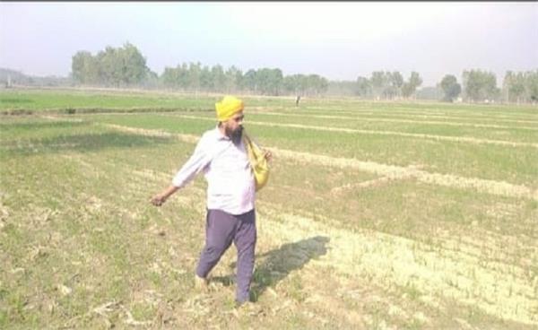 mla roopnagar amarjit singh sandoya farmers crops