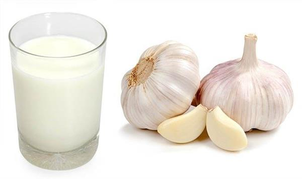 health tips  drinking garlic mixed with milk amazing benefits body