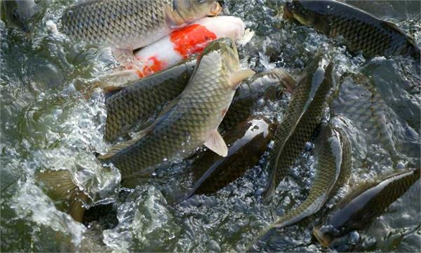 fisheries could raise 9 9 billion in 5 years  officials