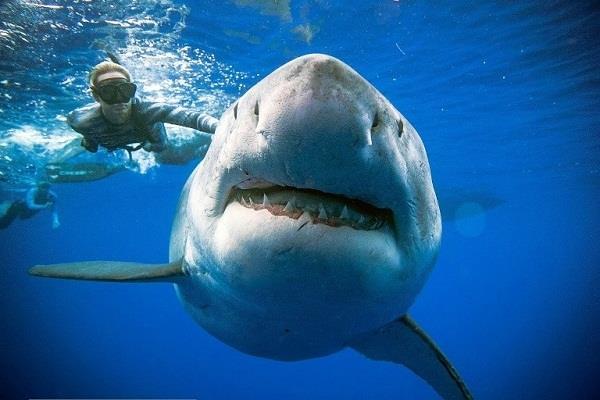 western australia  shark attack