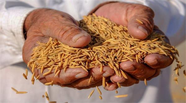 govt paddy buying rises 18 8 per cent so far