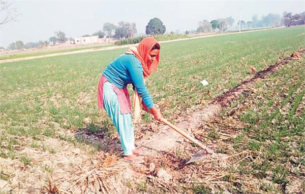 farmer movement daughter agriculture law