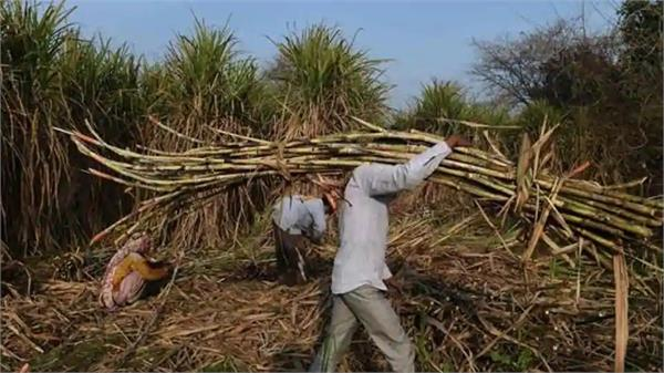 cabinet okays rs 3 500 cr sugar export subsidy