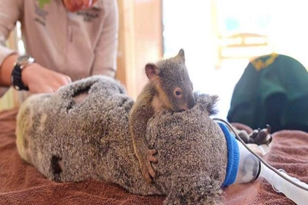 australia injured mother
