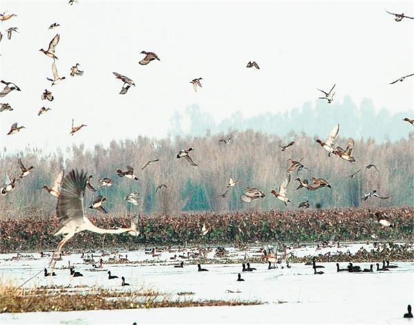 tarn taran  harike vaitalainda  exotic birds  survey completed
