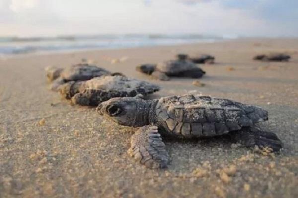 mexico city  300 turtles