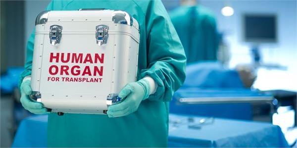 machine keeps human livers alive for a week outside body