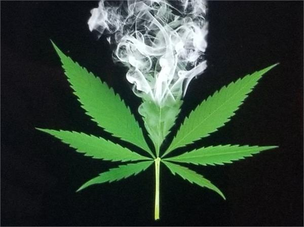 marijuana may affect driving ability for 12 hours after use