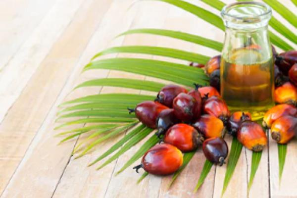 india issues licenses for import of refined palm oil from three countries