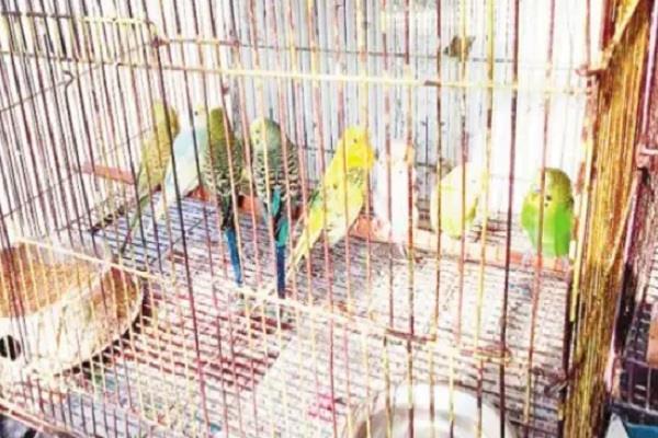 sparrows sale in ludhiana