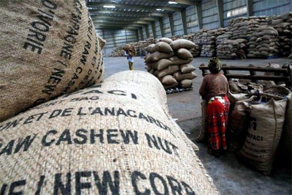 thieves took 213 kg of cashew from a gujarat warehouse