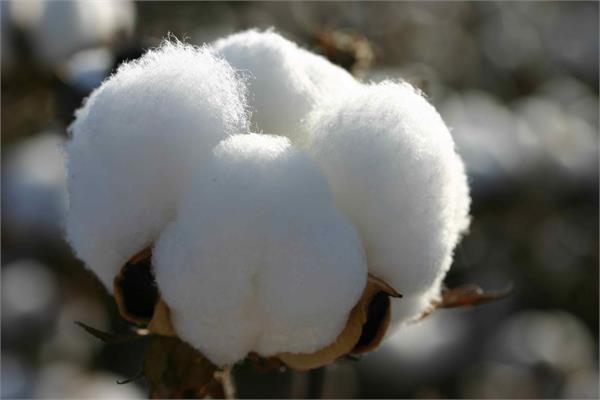 cotton purchase over 1 million